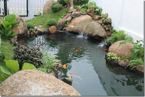 mẫu hồ cá đẹp